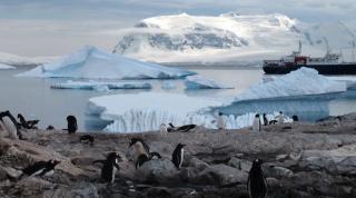 В Антарктиді з`явилися комарі