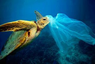 Вчені створили мікс ферментів, які поїдають пластик утричі швидше, ніж сама природа