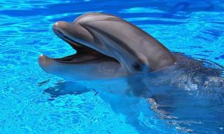 Дельфіни – найкращі лікарі та психологи