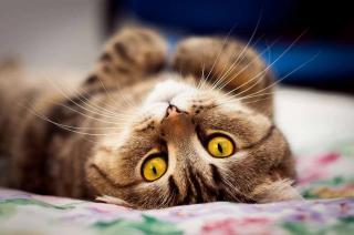 Кішки та їх господарі: що спільного?