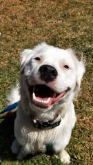 Майже глухий і сліпий пес піклується про інших тварин і абсолютно щасливий!