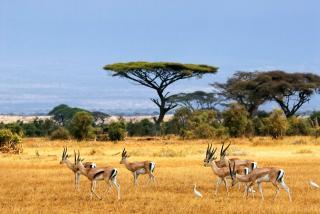 5 тварин з дивовижними надздібностями