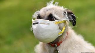 Вчені розповіли, які тварини можуть підхопити коронавірус