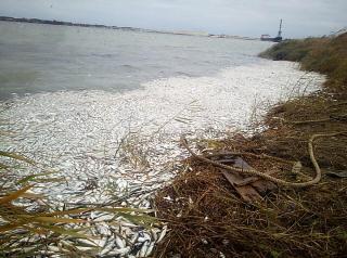 Екологічна катастрофа в Дніпрі