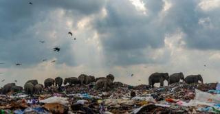Слони на звалищі: моторошний знімок виграв конкурс Королівського біологічного товариства Британії