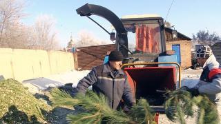 Новорічні ялинки в Житомирі будуть переробляти на обігрів для теплиць