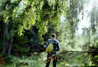 З Італії просто в ліс – карантин штовхає людей на несподівані вчинки