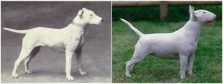 Як змінилися породи собак за останні 100 років?