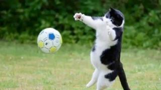 Кіт-воротар підкорив мережу: кумедне відео