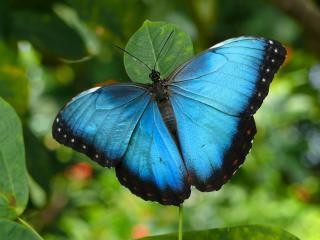 На території вічної мерзлоти живуть метелики