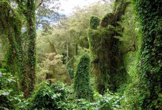 Учені знайшли місце на Землі з найбільшим різноманіттям рослин