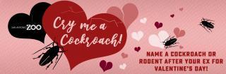 Акції до Дня закоханих: назвіть таргана ім'ям вашого екса та згодуйте його птахам
