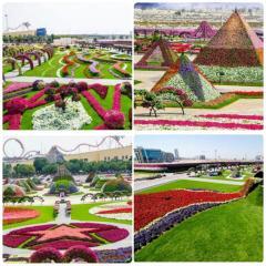 Багатобарвний оазис - Dubai Miracle Garden