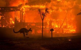 Через пожежі в Австралії загинуло понад мільярд тварин