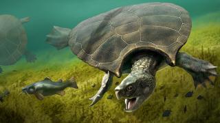 У Південній Америці знайшли останки черепахи розміром з вантажівку