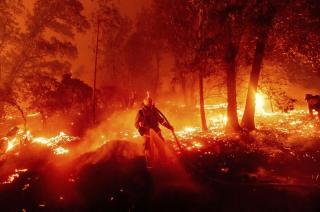 Площа пожеж у Каліфорнії перевищила 880 тисяч гектарів