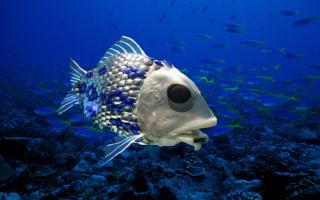 Учені з'ясували, звідки беруться риби в порожніх водоймах