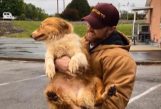 Собака-рятівник допомогла вижити сім'ї, а сама зникла - дивовижна історія Белли