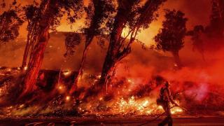 Масштабні пожежі в Австралії: чому палає та як допомогти