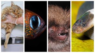 Риба-Ктулху, жук Грета та кишенькова акула: у 2019 році вчені відкрили 11 видів тварин