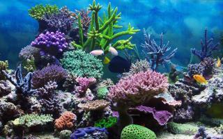 Корали можуть зникнути назавжди