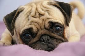 Учені виявили, що собаки також переживають