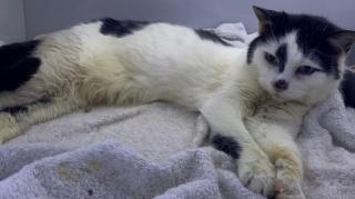 В Англії кішка повернулася додому після 11 років життя на смітнику