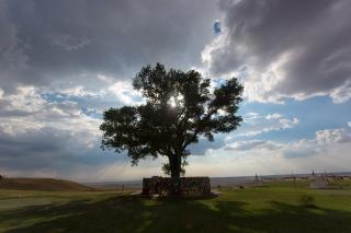 В Європі провели конкурс на найкраще дерево 2020 року: вражаючі фото